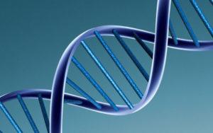 DNAモデル