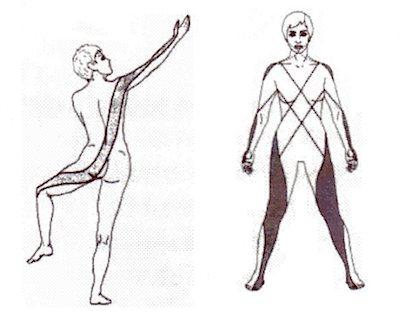 「筋膜連結」の画像検索結果